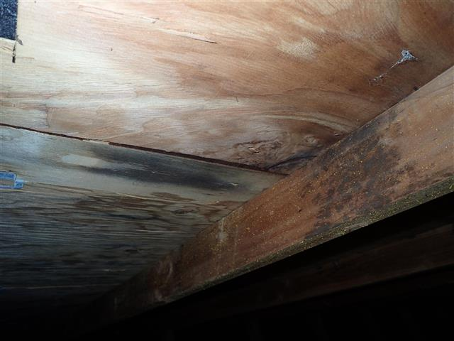Because we are licensed home inspectors, we take a holistic approach to water and moisture management in the home.